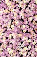 """Батист """"Цветочная поляна из сиреневых цветов"""""""